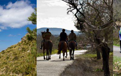 Aktivitäten Mallorca – Wandern, Reiten, Radsport