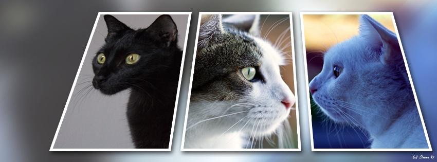 Unsere ersten 3 Katzen...