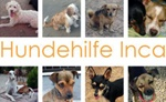 Hundehilfe Inca ~ Ingrid Mauer
