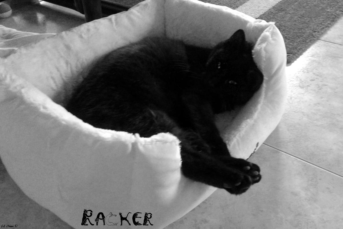 Kater Racker
