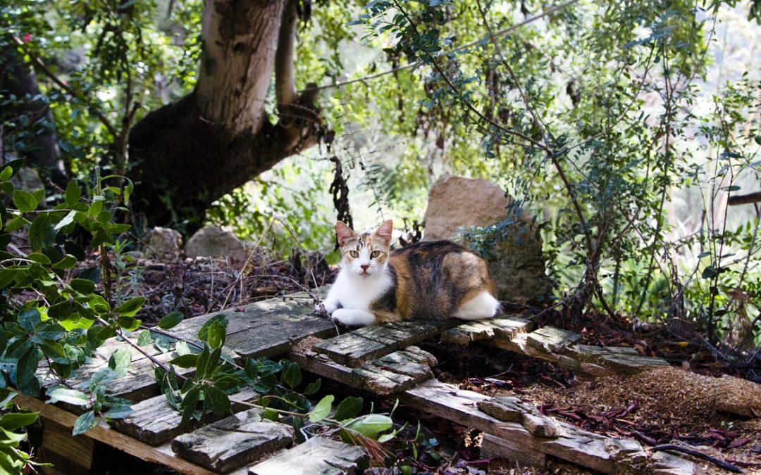 Feliz Animal Andratx by Helga