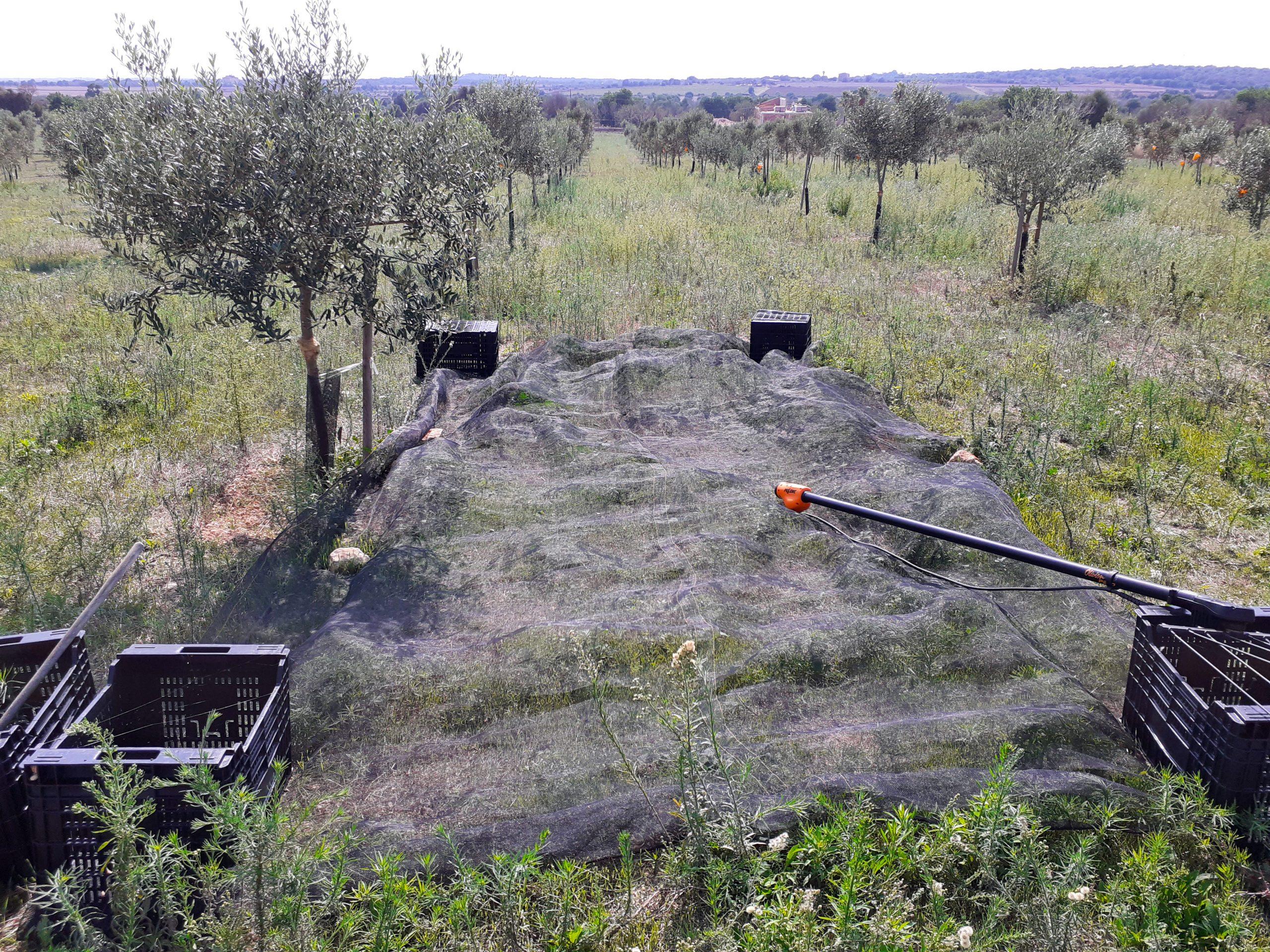 Olivenöl Manufaktur