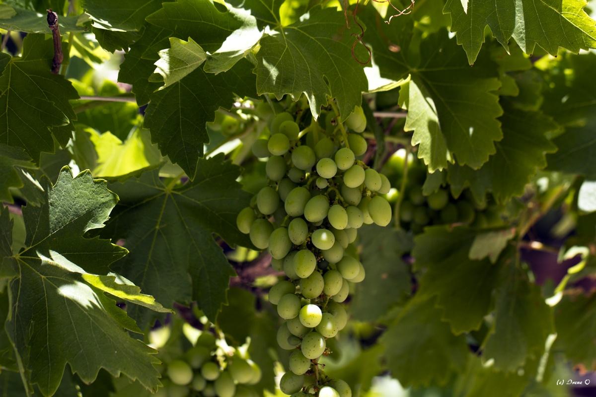 28.09._29.09. Weinfest in Binissalem @ Binissalem | Balearische Inseln | Spanien
