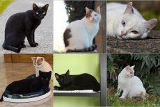 col_Unsere 6 Katzen