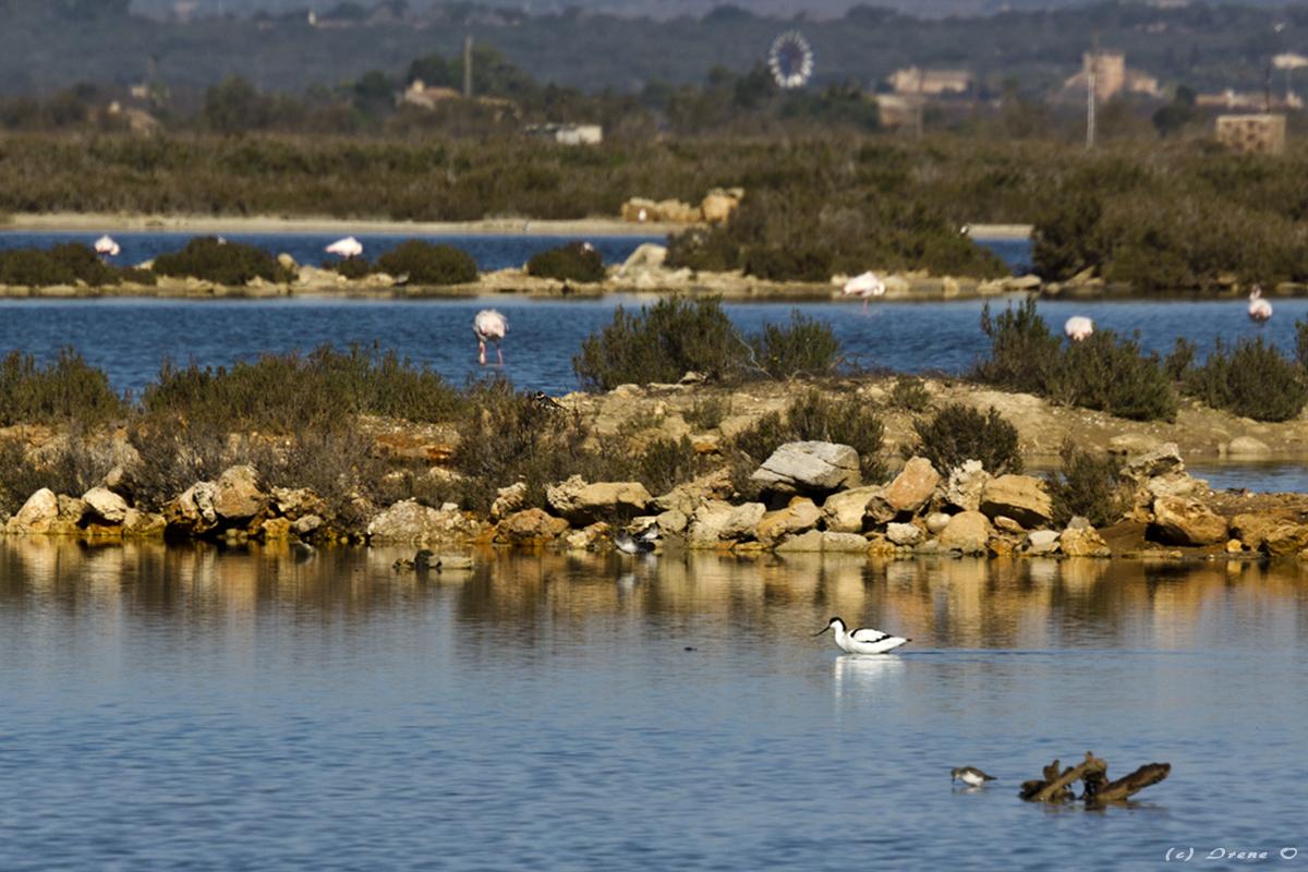 Naturschutzgebiet - Es Trenc