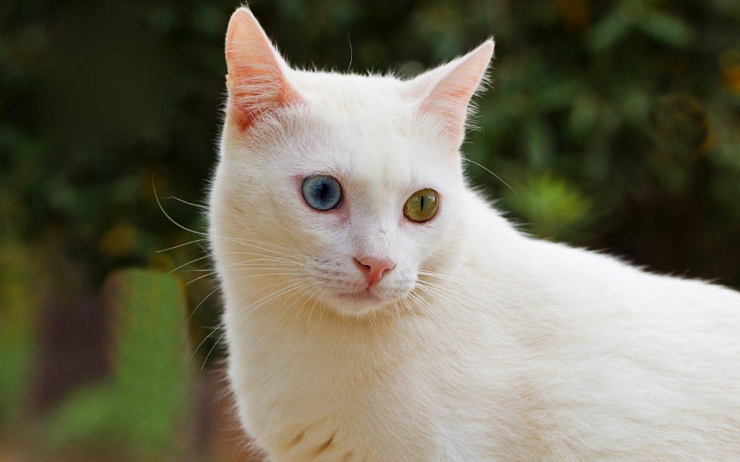 Ihre Unterstützung für Katzenfutter