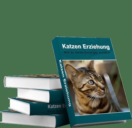 Katzen Erziehung